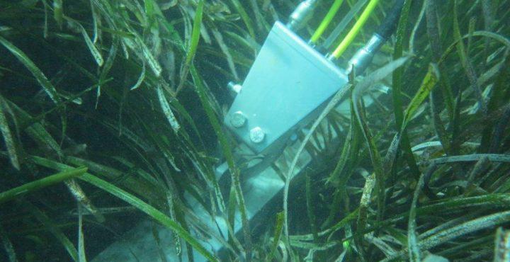 Green-environment-Seaflex
